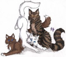 ShadowClan Three by CaptainMorwen