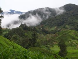Cloud Forests by VinVagia