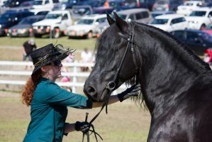 STOCK - Canungra Show 2012 185 by fillyrox