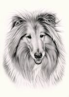 Mr Collie Finished by Craig-Max