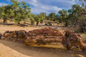 Petrified Wood. by K1ntar
