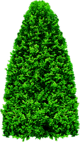Tree PNG by dbszabo1