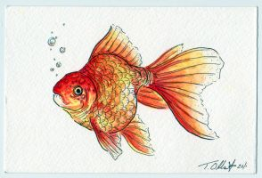 Fish Postcard by Tyleen