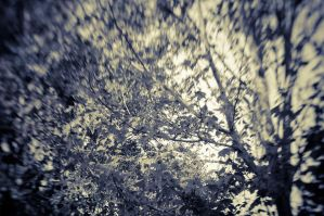 View through the trees by speedofmyshutter