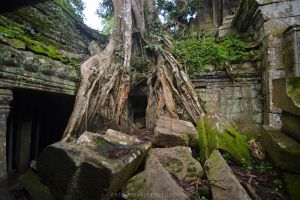 Tree Temples of Angkor by drewhoshkiw
