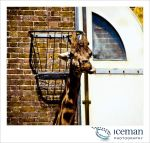 London Zoo 02 by IcemanUK