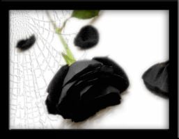Black Rose by Treesnake