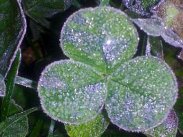 Frosted Clover by ObliviousMind