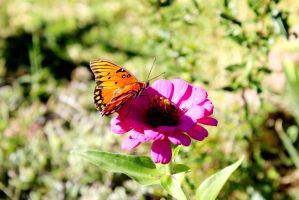 Butterfly3 by Thepieholephotograph