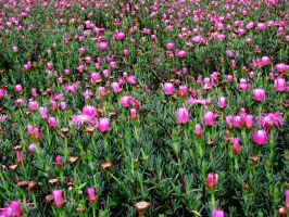sea of flower by rabi-ban