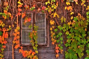 window hdr stock vivid by marlene-stock