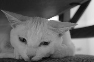 cat in black and white four by bobbyfufu