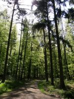 Forest - Wald by archaeopteryx-stocks