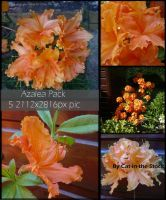 Azalea Pack by Cat-in-the-Stock