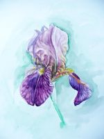 Iris Watercolor by Vincik