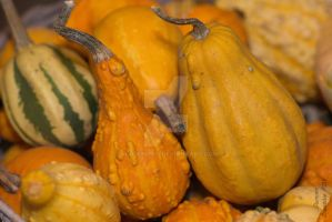 Gourds #1 by agbduncan
