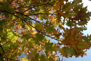 Untitled. Leafs of Heaven by lifeforceinsoul