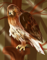 Red-Tailed Hawk Painting by geekgirl8