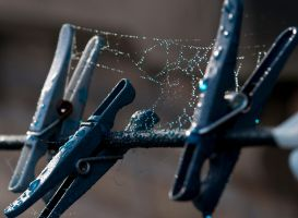 Webs on pegs by Quinnphotostock