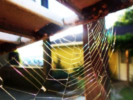 Spider Web by wentzxxpete