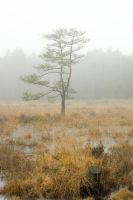 Silent trees in misty land 9 by steppeland