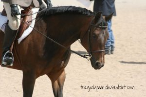 Quarter Horse Stock 70 by tragedyseen