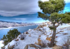 Tree at Horsetooth Reservoir by MirMidPhotos