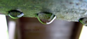 green and small drops by K-O-Photography