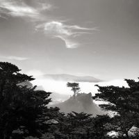 The Lone Cypress Tree by allsoulsnight