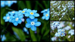 flowers by LirianaPhotography