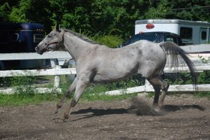 Appaloosa 70 by Spotstock