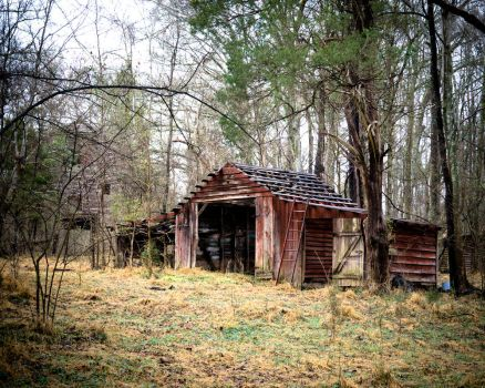 The shed out back by EFPhoto