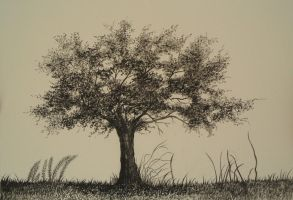 Walnut Tree by aakritiarts
