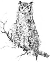 Hatched Owl by dthehippie