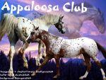 Appaloosa Club Layout by Go-Insane