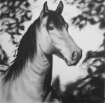 Horse charcoal by Luisamd