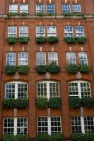 Windows and Ivy by sheiabah