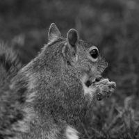 SquirrelFriend 2 by Suinaliath