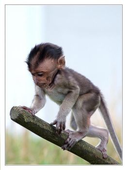 baby monkey by creativegrafix