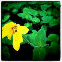 Yellow On Green by XuchilbaraPH