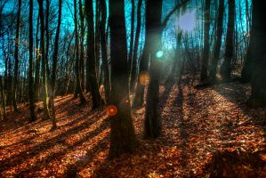 Light in the wood by Zeyr96
