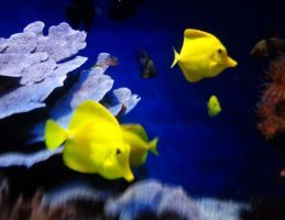 yellow fish. by Freecaster