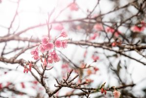 Blossoms and Light by TimGrey