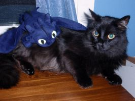 Toothless and Kitty the Cat by Ninjabirthdaycake