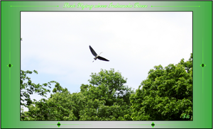 Stork Flying above the Indianola River by Taures-15