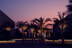 Palm Trees by Einas-A