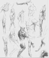studies of the human body by TomekO