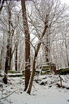 Winter Forest Stock 24 by AreteStock