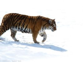 March Upon the Snowfield by HeWhoWalksWithTigers