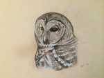 Daily Sketch: Morgan the Sparred Owl by weasels